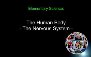 Grade 5 Human Body Lesson 10 Nervous System - Ms Palmer's