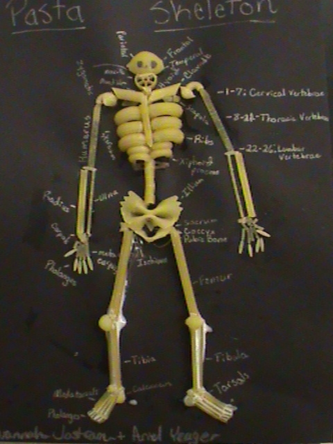 grade 5 human body lesson 7 skeletal system - ms palmer's, Skeleton
