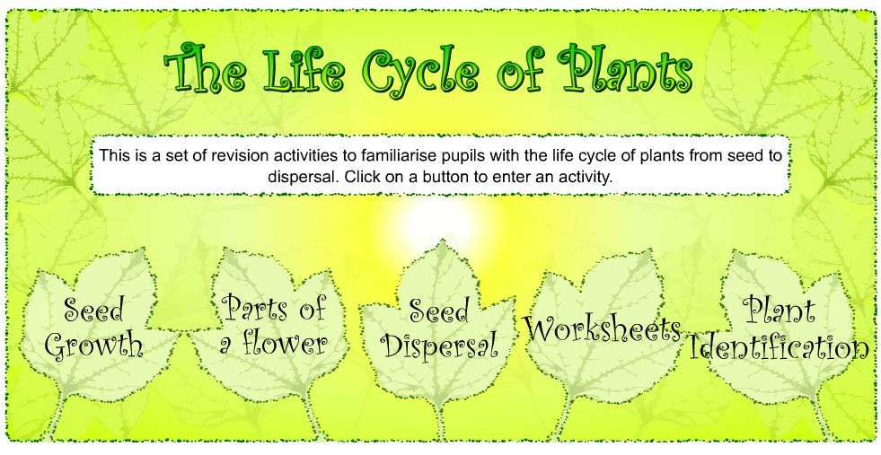 Grade 6 Diversity Of Life Lesson 26 Plant Kingdom Ms Palmers